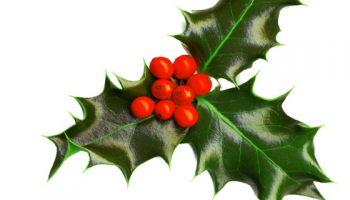 Christmas Symbols and Traditions -HOLLY